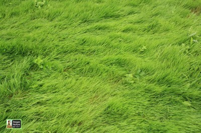 Images In Nature Grass Playmat