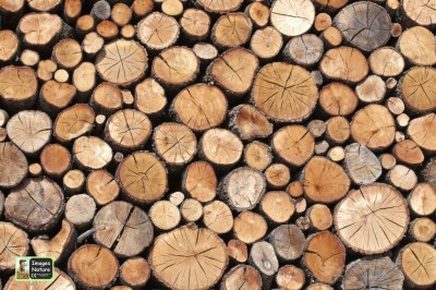 Images In Nature Logs